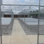 sweet-potato-greenhouse-at-NC-State_3A